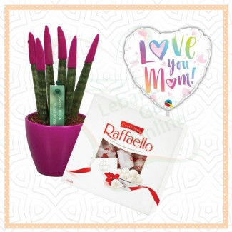 Sansevieria Raffaello Combination To Your Mother