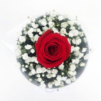 Cylinder Rose