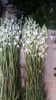 Lilis bouquet