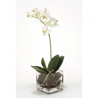 Orchide stem n Glass