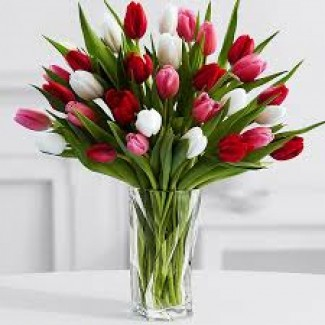 Multi-Colored Tulips in a Vase