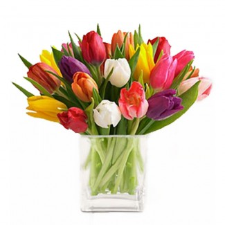 Multicolored Tulips in Cube