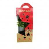 Christmas Bonsai